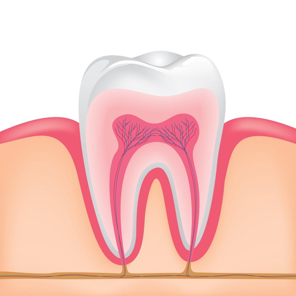 آیا همه موارد عفونت دندان برگشت پذیر  هستند؟