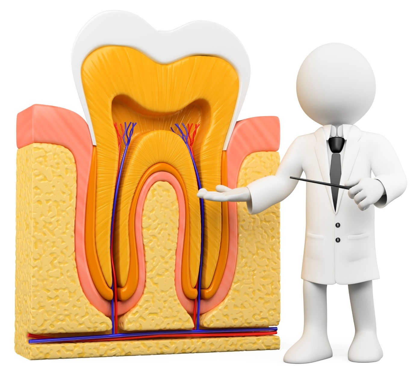 چند سؤال رایج در مورد عصب کشی و پر کردن دندان